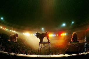 Цирк - Киев