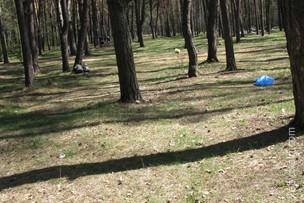 Парк партизанской славы - Киев