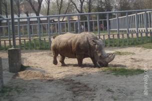 Киевский зоопарк - Киев